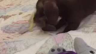 Small puppy playing with baby
