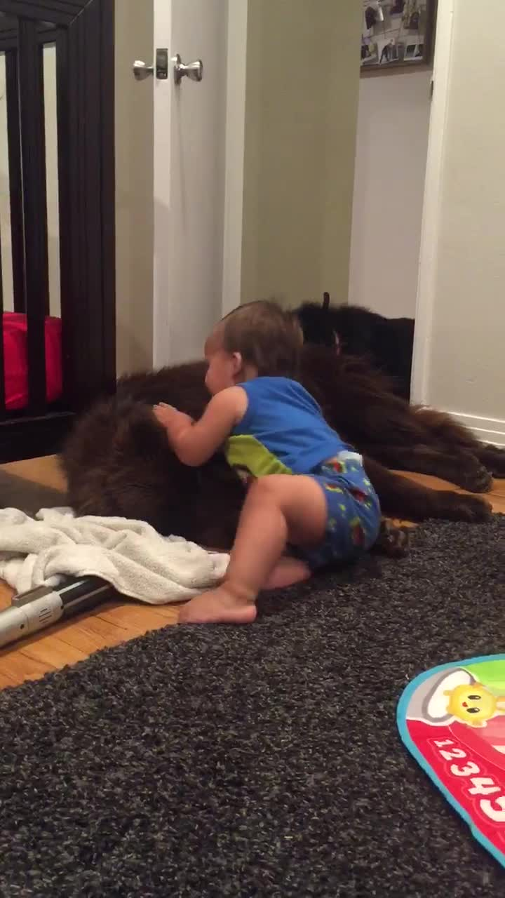 Priceless moment captured between baby and dog