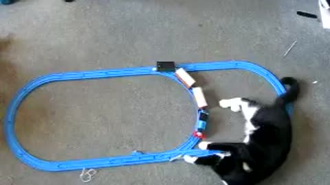 Cute cat derailed thomas the tank engine