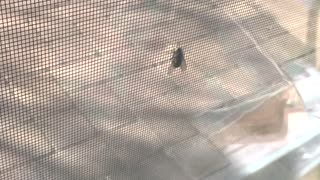 Fly on a Screen - Video