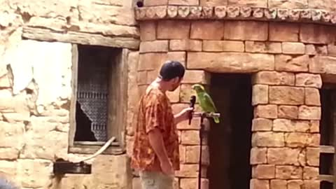 Vocal parrot sings song for an audience