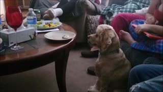 World's most obedient dog refuses to give in - Video
