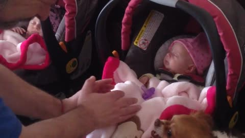 Chihuahua protects newborn twin girls