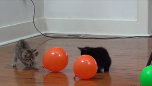 These kittens absolutely love playing with balloons - Video