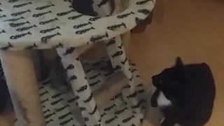 Adult cat puts playful kitten in check - Video