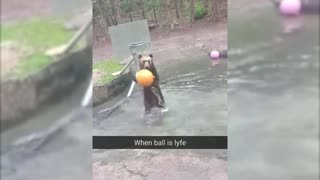 Bear playing basketball