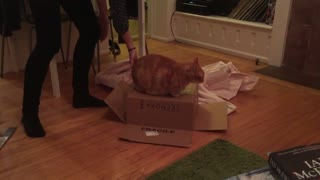 Cats demonstrate 'Inception' idea with stacked boxes - Video