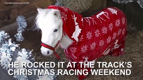 Adorable Pony Celebrates Christmas – The Cutest Holiday Tradition Ever!