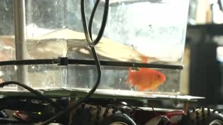 Who says fish can't drive?