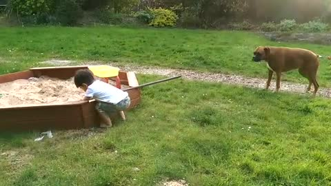 Toddler and Boxer dog playful in the sandpit