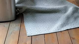 Adorable little puppy hides under a rug