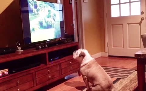 Dog sits too close to TV, gets taught a lesson
