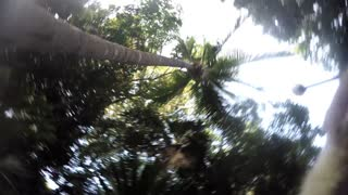 Curioso coatí arrebata una GoPro - Video