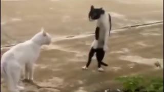 Let's fight! lmao! - Video