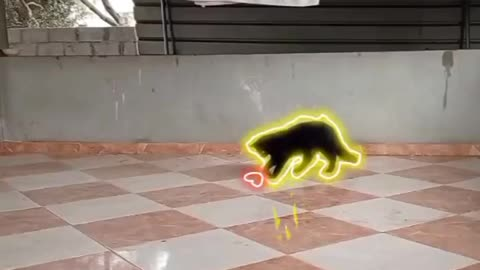 The cat plays the color ball