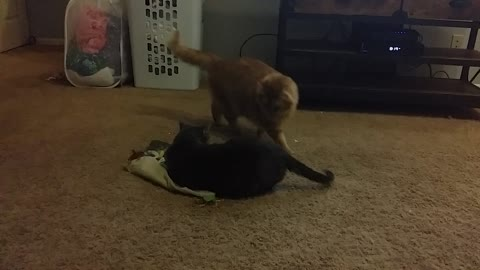 Kitties Rumble for Cat Toy Blanket