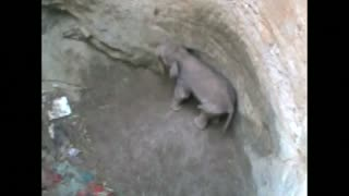 Baby elephant rescued from well - Video