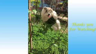 Cute Pets And Funny Animals Compilation2021 - Pets Garden