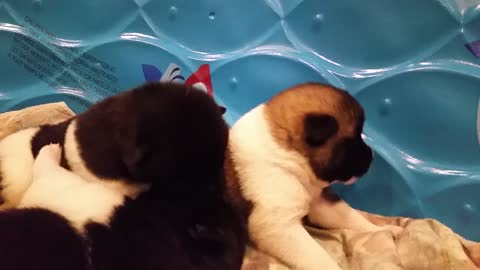 puppies 1st steps