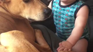 Baby can't stop laughing at dog's presence