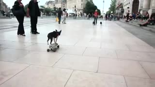 Skateboarding Dog - Video