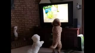 Puppies bark at other dogs on TV - Video