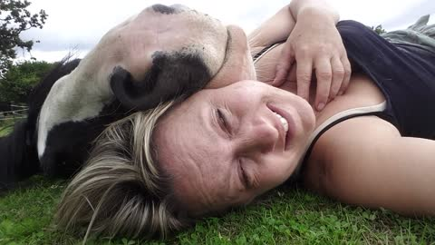 Woman Likes To Take A Nap With Her Holstein Cow