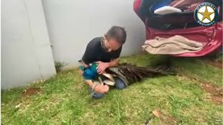 Peacock found in suspects' getaway vehicle