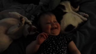 Baby cuddles with dog and cat - Video