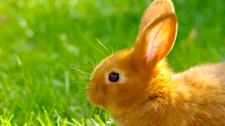 Amazing rabbit - Video