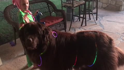 Little girl preps her giant puppy for Halloween