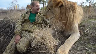 Cuddles with a Lion - Video