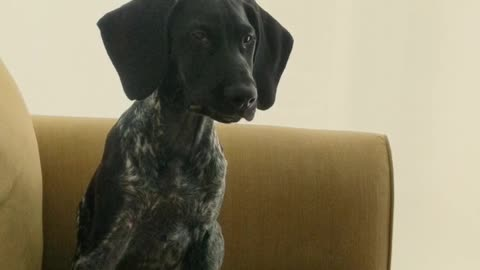 Bird dog hears geese for the first time, has adorable reaction