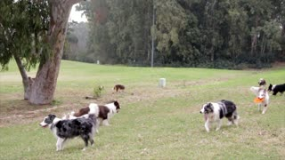 Play time for dogs with dog walker park