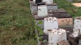 Millions of Bees
