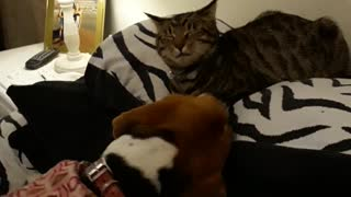 Unconditional Love between Cat and Dog!