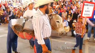 Donkeys Are Quite The Party Animals In Mexico - Video