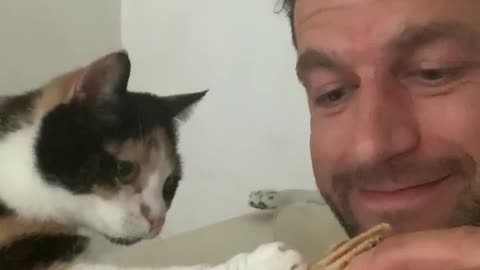 Watch this kitten beg for some scraps in the cutest possible way