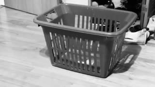 Collab copyright protection - black and white video cat laundry