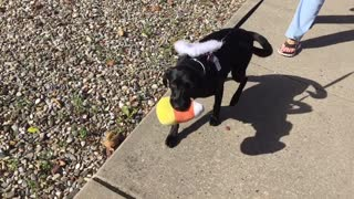Dog trick or treat  - Video