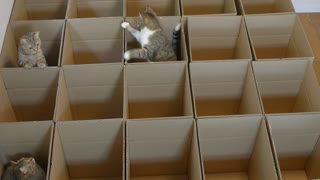 Cute little cats in maze - Video