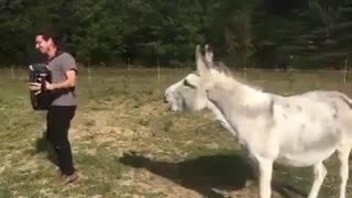 Singing Donkey - Video
