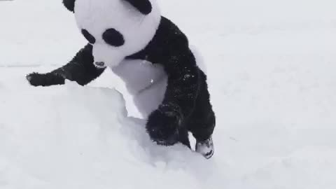 Man dressed as panda imitates Tian Tian's famous snowfall reaction