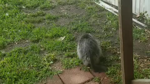 Smart cat knows when in trouble
