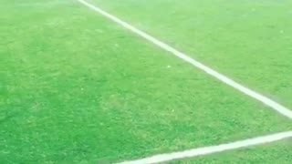 Dog chasing ball around in soccer field - Video