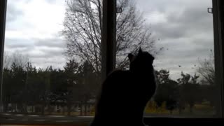 Every Cats Dream - Video