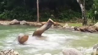 Elephant  swimming Form comedy - Video