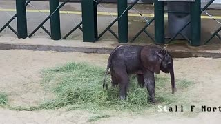Baby elephant arrives at Dallas Zoo