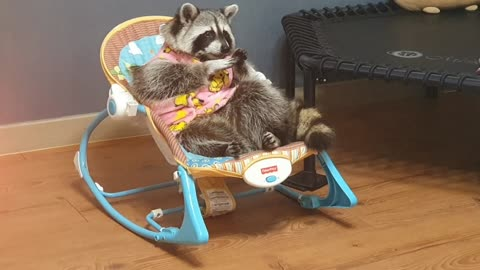 Raccoon in pink pajamas enjoys her time in the baby's cradle