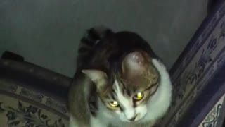 Badass cat Tom, has flashlights instead of eyes  - Video